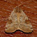 Smith's Dart Moth - Xestia smithii