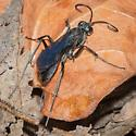 Small Spider Wasp? - female