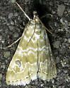 Wavy-winged Moth - Hellula rogatalis