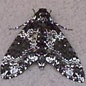 Silver and Dark Green Beauty Scottsdale AZ 85255 - Manduca rustica
