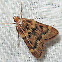 Pink-masked Pyralid Moth - Aglossa disciferalis
