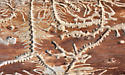 two-barked pine beetle tunnels - Pityogenes bidentatus
