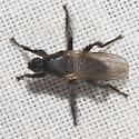 Coleopidae