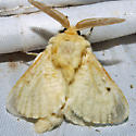 Florida Flannel Moth - Hodges #4643 - Megalopyge lacyi