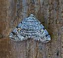 Moth_07012020_AC_1172 - Idia americalis