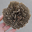 Old wasp(?) nest