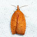Chokecherry Leafroller - Cenopis directana