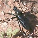 threadwaisted wasp ? - Ospriocerus aeacus - female