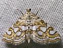 moth - Elophila ekthlipsis