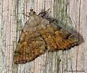 Unknown Moth - Idia americalis