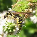 Crabronidae 02b - Philanthus