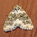 Moth-A - Cryphia nana