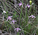 Some of the beautiful wildflowers we saw along roadsides and in bogs
