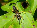 Orange-legged clear-winged wasp - Sphex nudus