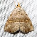 moth - Oxycilla malaca