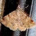 moth  - Toxonprucha volucris