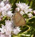 tiny butterfly 2