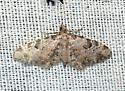 Moth - Prorella remorata