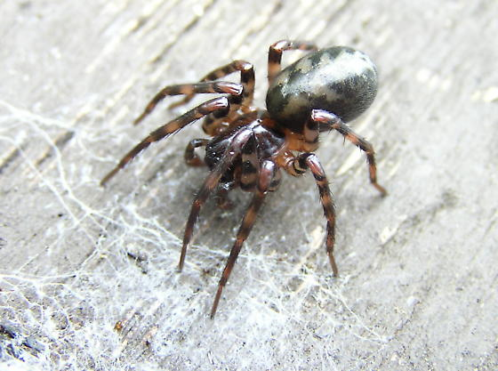 A big ugly looking spider.