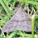 Speckled Renia Moth - Hodges#8386 - Dorsal - Renia adspergillus