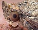 moth - Bulia