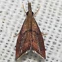 Hodges#5456 - Microcausta flavipunctalis