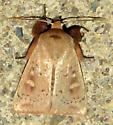 PM line moth