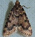 Pink-masked Pyralid - Aglossa disciferalis