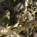 Crayfish on dirt road