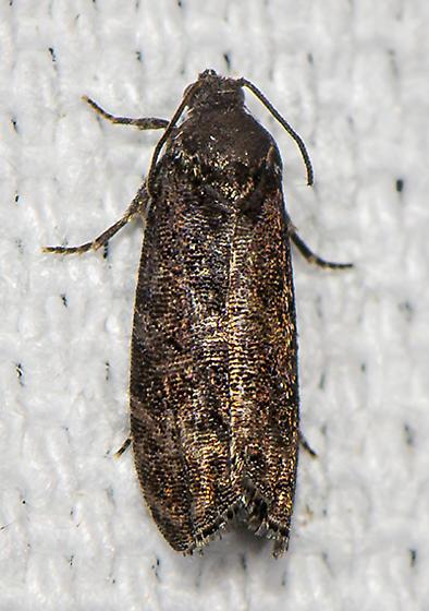 Olethreutinae ID request