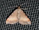 Blurry Chocolate Angle - Macaria transitaria