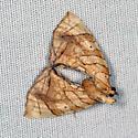 E. diversilineata or E. gracilineata  - Eulithis