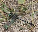 Dragonfly ???? - Arigomphus villosipes - male