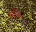 red mite eating unknown