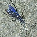Thread-waisted Wasp?