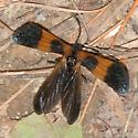 Probably common, but I am stumped - Calopteron