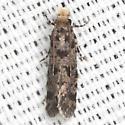 Burrowing Webworm Moth - Hodges #0335 - Amydria margoriella