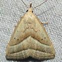 8357 Slant-lined Owlet - Macrochilo absorptalis