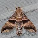 Half-blind Sphinx Moth - 7846 - Perigonia lusca