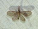 Nallachius americanus? - Nallachius americanus - male