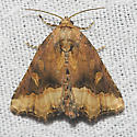 Waterlily Moth - Hodges#9056 - Homophoberia cristata - female