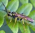 yellow wasp? - Tenthredo