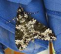 moth - Manduca rustica