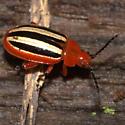 Disonycha abbreviata - Disonycha discoidea