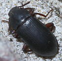 Black beetle with reddish legs - Neatus tenebrioides