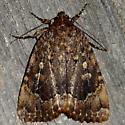 Copper Underwing - Amphipyra pyramidoides