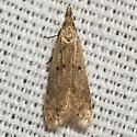 Many-spotted Dichomeris Moth - Hodges #2288 - Dichomeris punctipennella