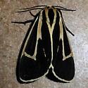 8170 Banded Tiger Moth - Apantesis