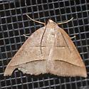 Unidentified Moth-20200215 - Petrophora divisata