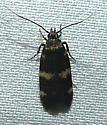 Moth - Oegoconia